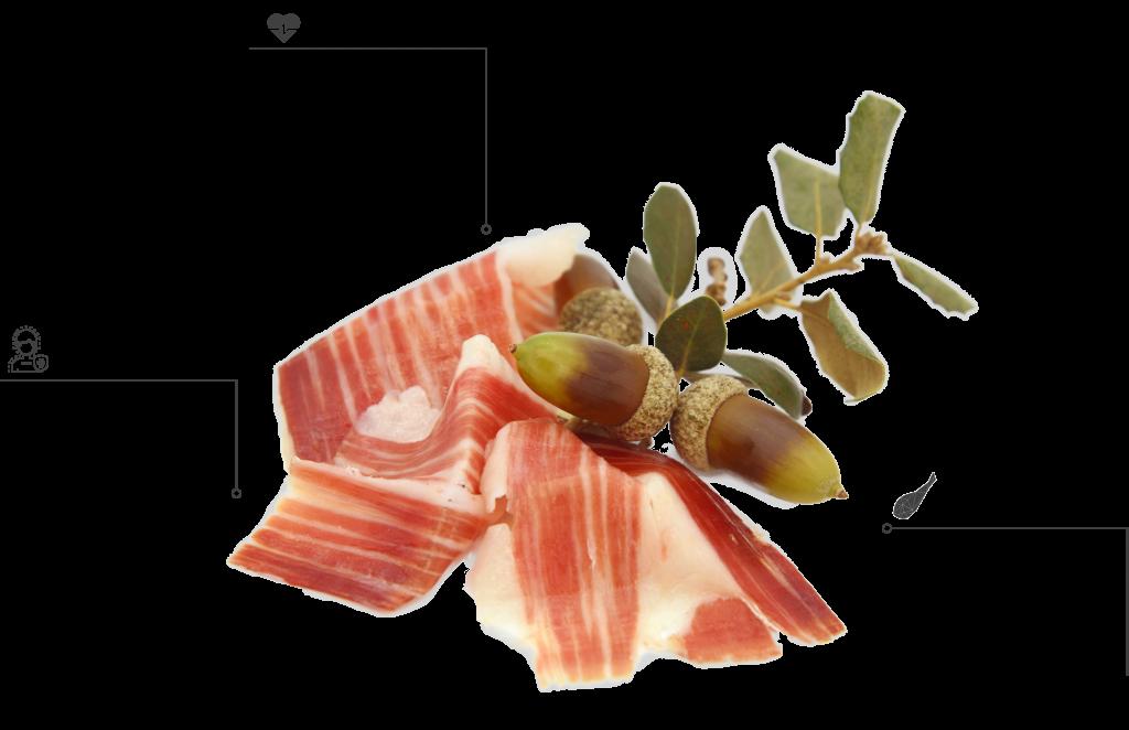 Iconografía sobre los beneficios del Jamón de bellota ibérico de Embutidos Quintero.