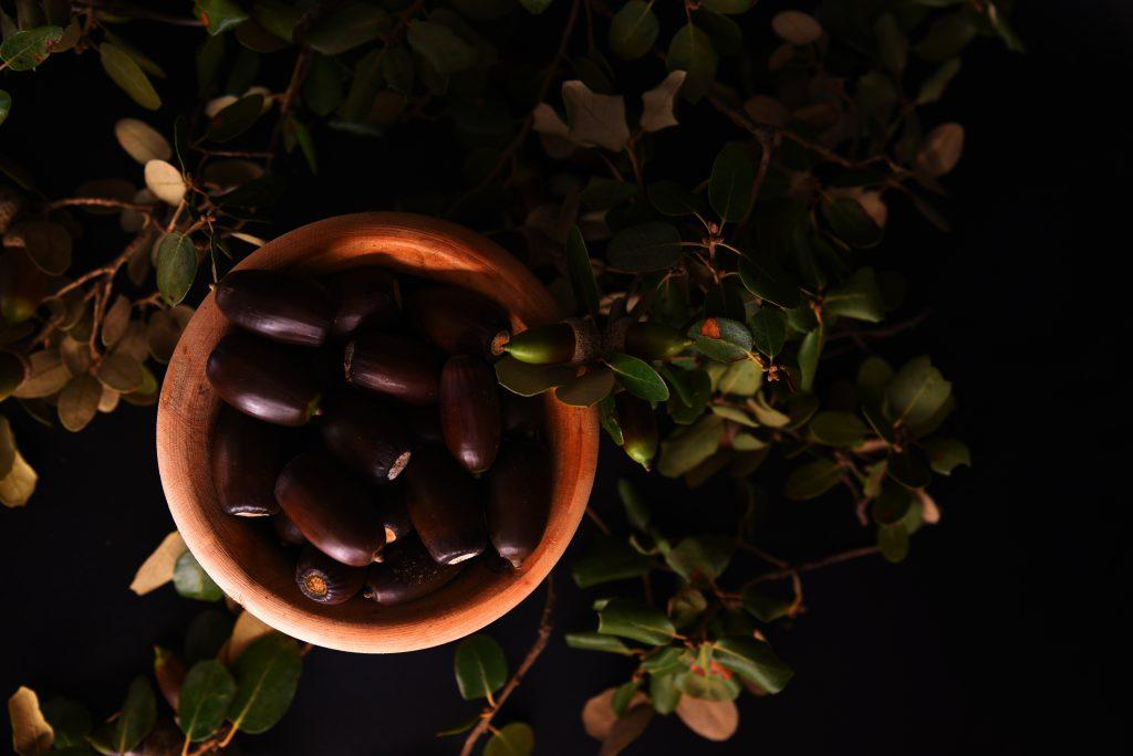 Imagen de un perol de bellotas de la Dehesa de Extremadura.